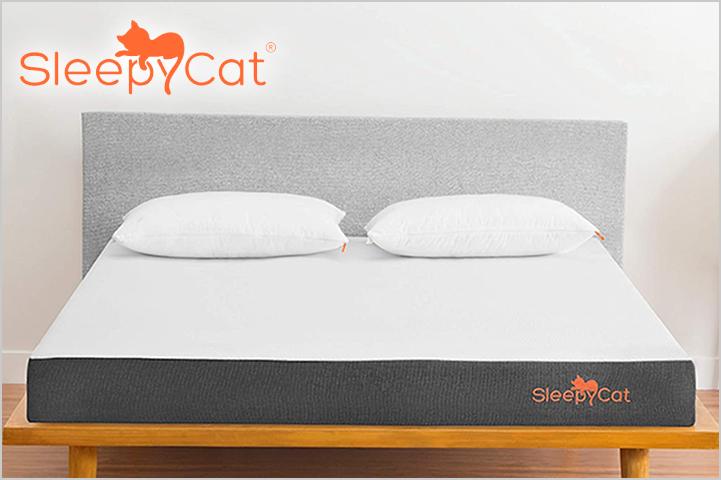 SleepyCat-Best Sites to Buy Furniture